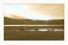 'Pferdeweide am See' von Dirk h. Wendt bei artflakes.com als Poster oder Kunstdruck $18.03