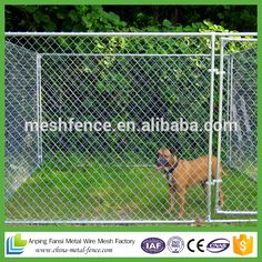 greyhound runs dog puppy cat run cage enclosure kennel yard