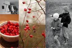 U nás na kopečku: šípkový čaj Fruit, Food, Eten, Meals, Diet