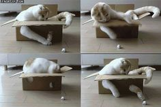 19 Irresistible GIFs of Cats in Boxes from GifGuide