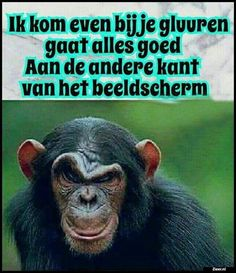 Ik kom even bij Happy Animals, Funny Animals, Haha Funny, Lol, Dutch Quotes, Twisted Humor, Funny Babies, Funny Photos, Make Me Smile