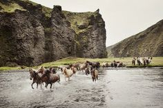www.horsealot.com, the equestrian social network for riders & horse lovers | Equestrian Photography : Gigja Einarsdottir.