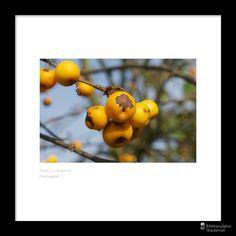 cool Fotografie »Herbstapfel 1«,  #Food #Herbst #Naturansichten