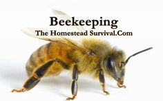 Tons of Beekeeping Articles from The Homestead Survival website - Homesteading & Bees