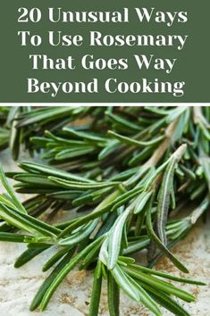 20 Unusual Ways To Use Rosemary That Goes Way Beyond Cooking is part of Medicinal herbs garden - Rosemary is one of the most aromatic and pungent herbs around, here are 20 creative ways to use this wonderful versatile herb and not just in recipes Rosemary Plant, How To Dry Rosemary, Rosemary Ideas, Uses For Rosemary, Rosemary Growing, Rosemary Water, Healing Herbs, Medicinal Plants, Herbs