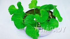 Přírodní prevence Alzheimera a demence - pupečník asijský, gotu kola Gotu Kola, Pesto, Spinach, Plant Leaves, Vegetables, Plants, Food, Gardening, Alcohol
