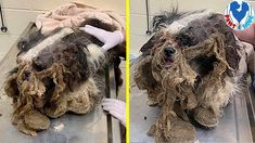 Rescue Poor Dog Was Dumped On The Streets By a Breeder Rescue Dogs, Animal Rescue, Pet Corner, Poor Dog, Animal Species, Puppy Mills, Christmas Dog, Animal Rights, Puppies