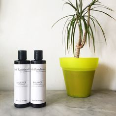 Rocks & Salts  - A love affair with josh rosebrook - the first natural shampoo that has worked and healed a truly problematic scalp - read more! #naturalhaircare #cleanhaircare #joshrosebrook