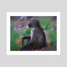 #INPRNT #fine art #print #poster #art Forest And Wildlife, Pet Monkey, Baboon, Print Poster, Savannah Chat, Meditation, Fine Art, Art Prints, Printed