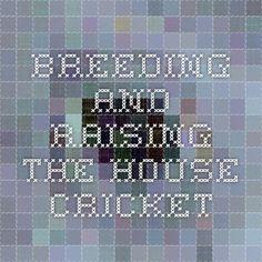Breeding and Raising the House Cricket