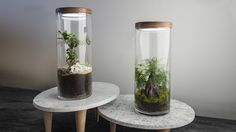 EcoTerra is a terrarium that has been specially designed so you can take home your favourite landscape. Designed to be an independent ecosystem, EcoTerra makes it possible for you to grow even the most demanding plants and bonsais, with no necessary upkeep.