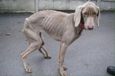 Couple convicted of animal cruelty after starving dog so badly 'you could see every bone in its body' Canned Dog Food, Animal Cruelty, Dear God, Art Inspo, Dog Food Recipes, Creatures, Pets, Animals, Twitter