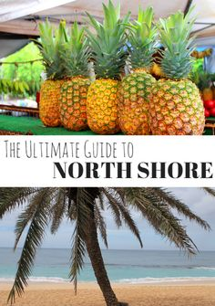 One of my favorite places that I loved on Oahu was the North Shore. This part of the island was everything you'd dream of when you think of a tropical escape. Here are some of my favorite things to eat, see, and do in this part of Hawaii.