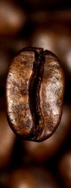coffee bean. hmmmm does it fall under 'vegetable' category?