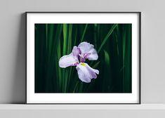 Limited edition signed photographic print by Anna Partington - 'Iris' - White and purple iris flower in Cornwall Purple Iris, Iris Flowers, Bank Holiday, Epson, Cornwall, Anna, Handmade Gifts, Artist, Prints