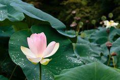 Kyoto Botanical Garden