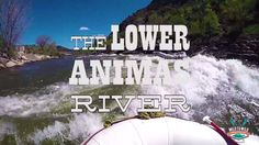 The Lower Animas is the perfect family rafting trip! Convenient and accessible. Trips leave everyday at 8:00, 9:00, & 1:30.