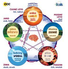 Čínský pentagram Esential Oils, Chinese Medicine, Acupuncture, Ayurveda, Cleanse, Health Fitness, Organization, Sport, Google