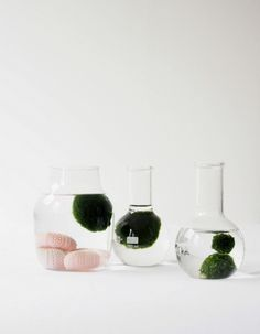 DIY Marimo Moss Ball Aquarium - monsterscircus