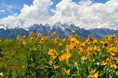 Summers in Wyoming: the Ultimate Jackson Hole Guide - Bon Traveler Colorado Lakes, Skiing Colorado, Wyoming Mountains, Jackson Hole Wyoming, The Mountains Are Calling, Celebrity Travel, Winter Scenes, Outdoor Camping, Ski Resorts