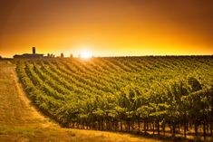 A dive into the diversity of Washington State wines Fun Wine Glasses, Best Places To Retire, Wine Vineyards, Bethany Beach, Water Pollution, Country Landscaping, Outdoor Recreation, Wine Country, The Locals