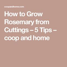 How to Grow Rosemary from Cuttings – 5 Tips – coop and home