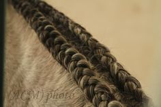 Double running braid on a horse's mane... Just beautiful!
