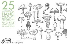 Hand Drawn Mushroom Toadstool Fungus by Nedti  on Creative Market