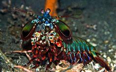 miguel cabrera: Underwater Zoo amazing creatures in Indonesia