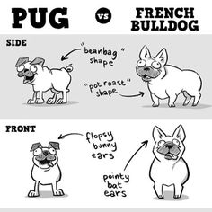 Pugs vs. Frenchies #infographic