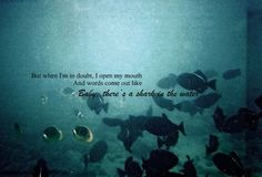 Shark In the Water: V.V. Brown