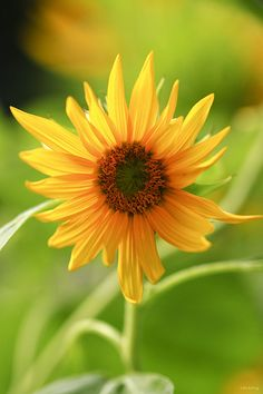 You are sunshine / Em như tia nắng mặt trời /