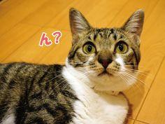 てんちゃんの好きな寝床|うにオフィシャルブログ「うにの秘密基地」Powered by Ameba