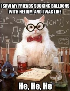 View this showcase of the best chemistry memes to have some fun with the rigorous science. Memes include chemistry cat (of course). Chemistry Cat, Chemistry Teacher, Humor Nerd, Nerd Jokes, Funny Jokes, Smart Jokes, It's Funny, Funny Laugh, Science Cat