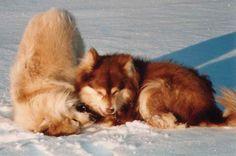 Tanta ja Welu-05. Kuva Mirja Siljander.