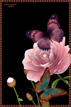 With Tenor, maker of GIF Keyboard, add popular Flowers animated GIFs to your conversations. Share the best GIFs now >>> Butterfly Kisses, Butterfly Flowers, Beautiful Butterflies, Beautiful Flowers, Flowers Gif, Orange Butterfly, Image Beautiful, Beautiful Pictures, Gif Bonito