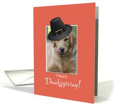 Funny Dog Thanksgiving, Humorous Wearing Pilgrim Hat card (1186074)