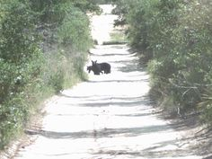 Ocala National Forest, a Florida National Forest located near Ocala. Bear's are often spotted along the more than 200 miles of atv trails.