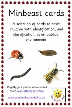 Minibeast Identification cards - Named, clear photographs of minibeasts with 2 questions on each card (each with a supporting visual prompt). Primary Science, Primary Teaching, Teaching Science, Teaching Resources, Insect Activities, Sensory Activities Toddlers, Science Activities, Nature Activities, Minibeasts Eyfs