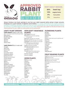 This is a guide to what fruits and veggies you can feed your rabbit. (all of the veggies and fruits listed are safe for your bunny to eat)