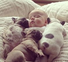 The war of the cutest is on! These dogs aren't prepared to let the baby win at any cost - ...