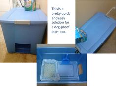 No dogs allowed! How to keep canines out of the litter box.