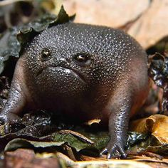 Black Rain Frog ........................................................ Please save this pin... ........................................................... Because for real estate investing... Click on this link now! http://www.OwnItLand.com