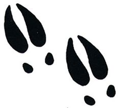 Moose Tracks, possible tattoo