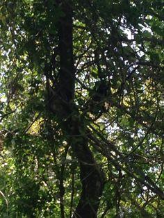 oh monkey, where art thou? Art Thou, Utility Pole, Monkey, Meet, Animals, Monkeys, Animaux, Animal, Animales