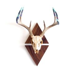 Hand Dipped Painted European Mount Deer Antler Rack on Walnut Triangles