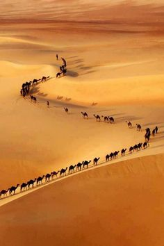Camel train, border Saudi Arabia