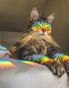 The wise rainbow cat - your daily dose of funny cats - cute kittens - pet memes - pets in clothes - kitty breeds - sweet animal pictures - perfect photos for cat moms Cute Baby Animals, Animals And Pets, Funny Animals, Funny Cats, Sleepy Animals, Funny Humour, Funny Memes, Cute Kittens, Cats And Kittens