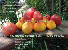 Oxheart Tomato Heirloom Collection Available @ http://renaissancefarms.org/healingharvest/store/products/oxheart-tomato-heirloom-collection/