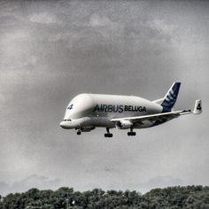 https://flic.kr/p/xfbm5y | Beluga | Airbus Beluga hier à l'aéroport de Toulouse Blagnac